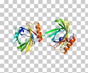 Prostaglandin D2 Synthase Prostaglandin-D Synthase Prostaglandin H2 PNG