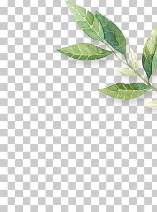 Leaf Herb PNG