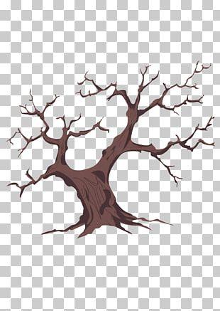 Washington Family Tree Genealogy PNG