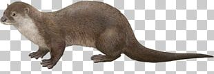 Mink The Otter Eurasian Otter Portable Network Graphics North American River Otter PNG