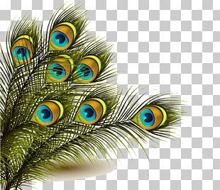 Peafowl Feather PNG