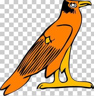 Atlanta Falcons Free Content PNG