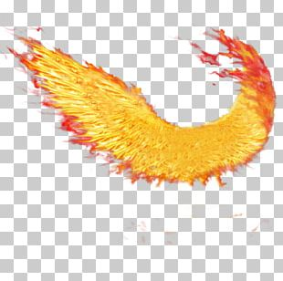 Buffalo Wing Fire Wings Sacramento Wings Of Fire Desktop PNG