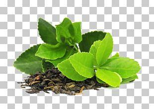 Green Tea Masala Chai Matcha Camellia Sinensis PNG