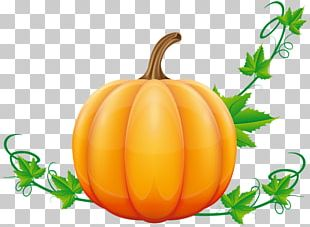 Pumpkin Pie Vegetable PNG