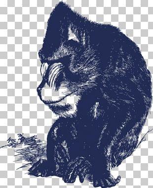 Black Cat Kitten Whiskers Raccoon PNG