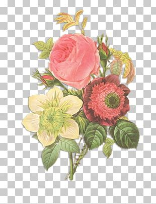 Flowers Pierre-Joseph Redouté (1759-1840) Rose Drawing PNG