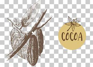 Theobroma Cacao Cocoa Bean Euclidean Illustration PNG