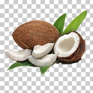 Coconut Milk Coconut Water Coconut Oil Meat PNG