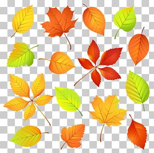 Autumn Leaf Color Watercolor Painting PNG