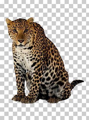 Leopard Cheetah Lion PNG