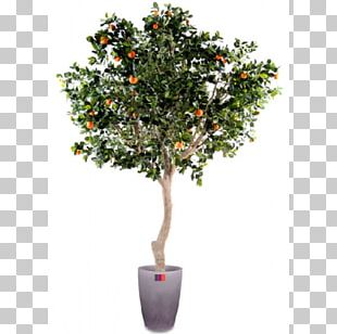Orange Fruit Tree Green Trunk PNG