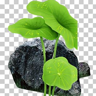 Leaf Flowerpot Annual Plant PNG