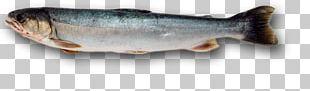 Sardine Fish Products Chignik Lake Oily Fish PNG