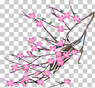 Cherry Blossom Text Illustration PNG
