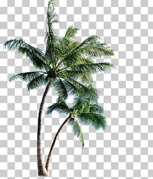 Phi Phi Islands Eleuthera PNG