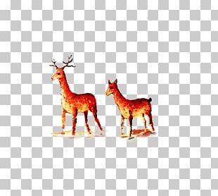 Reindeer Giraffe Antler Text Illustration PNG