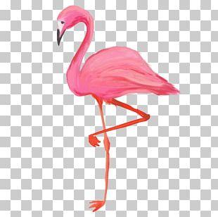 Bird Greater Flamingo American Flamingo T-shirt PNG