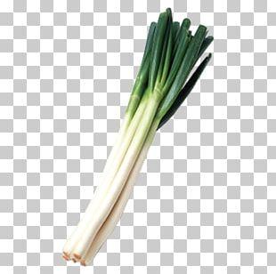 Allium Fistulosum Leek Calxe7ot Scallion PNG