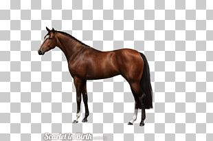 American Quarter Horse Andalusian Horse Stallion Quarter Pony PNG