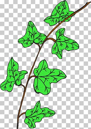 Leaf Plant Stem Flowering Plant Line PNG