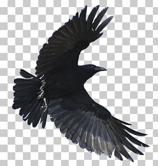 American Crow Hooded Crow Fish Crow Common Raven Bird PNG