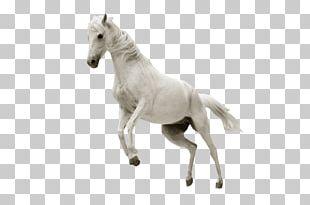 Horse Stallion Desktop Show Jumping PNG