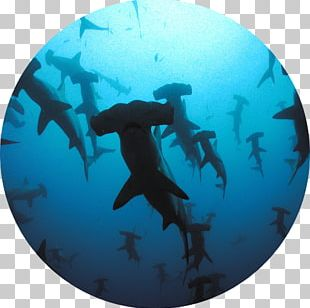 Shark Scuba Diving Wall Decal Liveaboard Great Hammerhead PNG