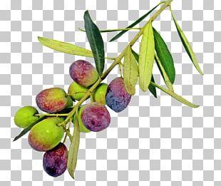 Olive Oil Greek Cuisine Olive Leaf PNG