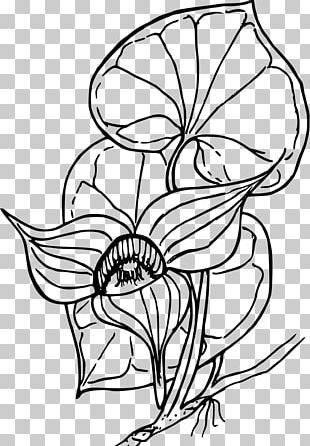 Coloring Book Drawing PNG