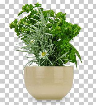 Flowerpot Ceramic Japanese Rock Garden Succulent Plant PNG