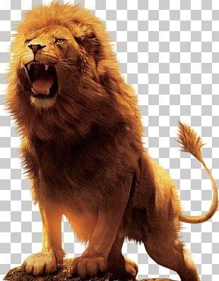 Aslan Lion Desktop PNG