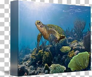 Biscayne National Park Coral Reef Fish Loggerhead Sea Turtle Ecosystem PNG