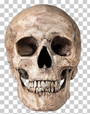 Skull Icon Computer File PNG