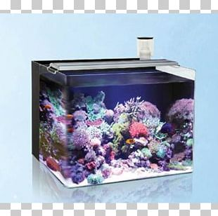Reef Aquarium Protein Skimmer Aquarium Filters Light PNG
