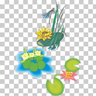 Nelumbo Nucifera 畫荷花 Ink Wash Painting Lotus Effect Watercolor Painting PNG