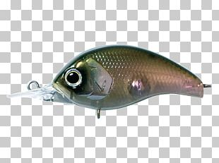 Milkfish Spoon Lure Oily Fish AC Power Plugs And Sockets PNG