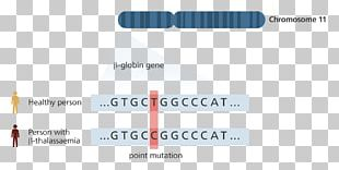 Genetics Genome Sequencing DNA PNG