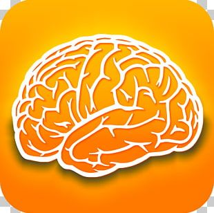 Human Brain Dietary Supplement Research Nootropic PNG