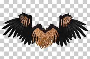 Wings Black And Brown Crow PNG