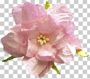 Flower Rose PNG