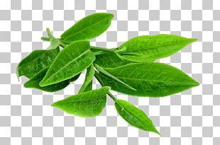 Green Tea Matcha Japanese Tea Ceremony PNG