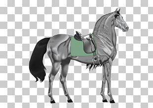 Stallion Mustang Pony Mare Rein PNG