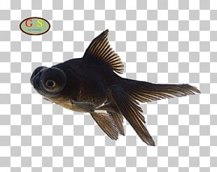 Fish Aquarium Telescope Photography PNG
