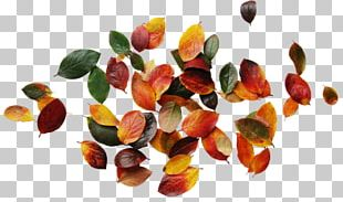 Autumn Leaves Graphic Design PNG