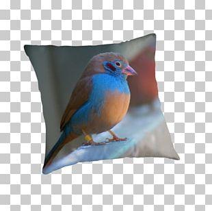 Wren Cushion Pillow Feather Beak PNG