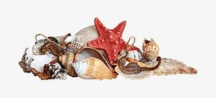 Sea Creatures PNG