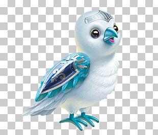 Owl Water Bird Beak Feather PNG