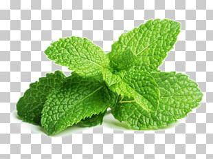 Peppermint Mentha Spicata Herb Mojito Leaf PNG