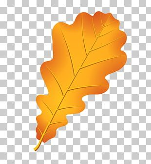 Oak Autumn Leaf Color Acorn Drawing PNG